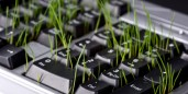 keyboard with grass growing out