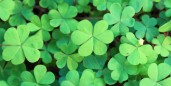 10 Great Green Jobs for Saint Patrick's Day