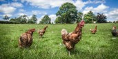 Are You a Free-Range Mobile Worker