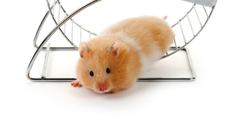 Are you stuck in a career comfort zone like a hamster in a wheel?