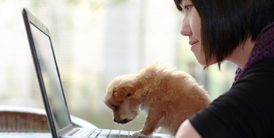 10 Work-from-Home Jobs for Dog Lovers